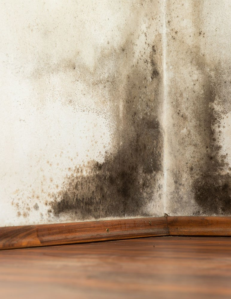 Mold Testing and Inspection by Absolute Environmental Solutions